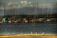 Sailboats at Sand Point