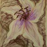 """Stargazer Lily in Pastel"" by dlmtleArt"
