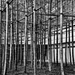 """Bamboo Matrix (B&W Soft Burn Version)"" by jonsheer"