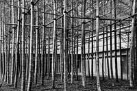 Bamboo Matrix (B&W Soft Burn Version)