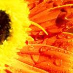 """Sunny Flower"" by annayanev"