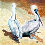 """brown pelicans"" by tica"