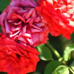 """flowertrio"" by joerichardson"