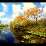 """""""Danube delta"""" by sz"""