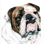 """Bulldog"" by KathleenSepulveda"