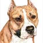 """""""American Staffordshire Terrier"""" by KathleenSepulveda"""