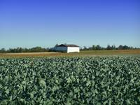 Maine_FarmLand_7