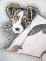 Jack Russell Terrier, Buntstift