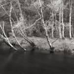 """black river"" by fineartplatinum"