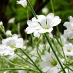 """""""Woodland Flowers"""" by choweth"""