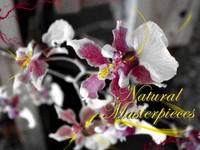 natural masterpieces
