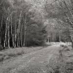 """forest walk"" by fineartplatinum"