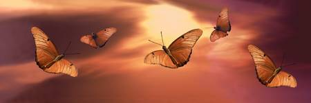 Butterflies at Sunset