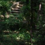 """Forest Steps"" by THRphotography"