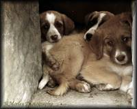 Wild and abandoned puppies in Ancient Ruins - Alti