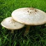 """Mushrooms"" by Onyx23"