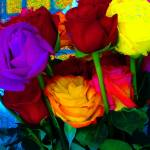 """""""Roses"""" by karla"""