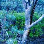 """""""Blue Forest"""" by karla"""
