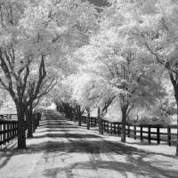 """Country Road - Infrared Trees Landscape"" by miir"
