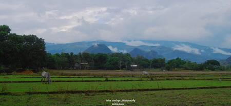 beauty of pangasinan