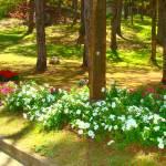 """roadside flowers"" by pinayflicker"