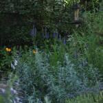 """Backyard Garden"" by SirenDesigns"