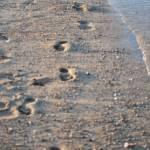 """Footsteps"" by SirenDesigns"