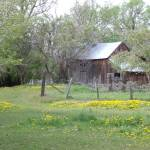 """Old Barn with yellow flowers"" by alexrice"