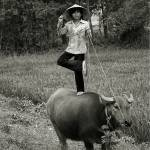 """Vietnamese Countryside Water Buffalo (Ky Su)"" by reneehoward"