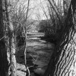 """Cathren Creek B/W"" by alexrice"