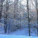 """""""Fresh Snowfall"""" by craglynn"""