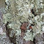 """Lichen Puzzle"" by LyndaLehmann"