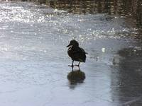 treading on thin ice