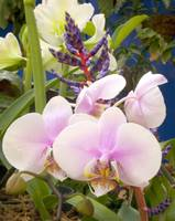 White Orchid and Bromeliad