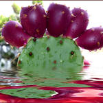 """*Prickly Pear*"" by NELLY"