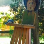 """""""Blue Jay"""" by craglynn"""
