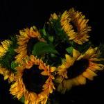 """Sunflowers"" by Nataliya"