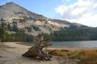 tree stump at Tenaya lake