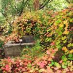 """Secret Garden"" by mirabelleza"