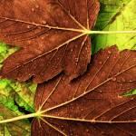 """Autumn"" by Highlights-Shadows"