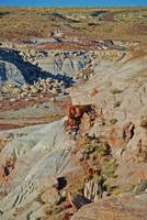 petrified forest canyon