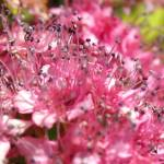 """PinkFlowers_1070_13x20Crop"" by OregonArtGuy"