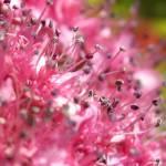 """PinkFlowers_1070_14x16Crop"" by OregonArtGuy"