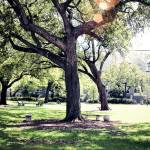 """tulane campus"" by emilymcalpine"
