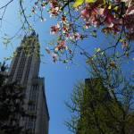 """Woolworth Building, NYC"" by basu122"