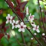 """""""Spring Floral"""" by AvisNoelleDesigns"""