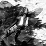 """""""A WIND FAE"""" by NaturePlusStudios"""
