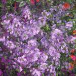 """""""*Flowers"""" by patriciaschnepf"""