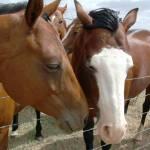 """Horse Love"" by birdie2533"
