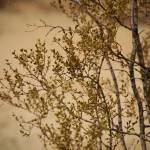 """Hike 1-4-09"" by TerraformDesign"